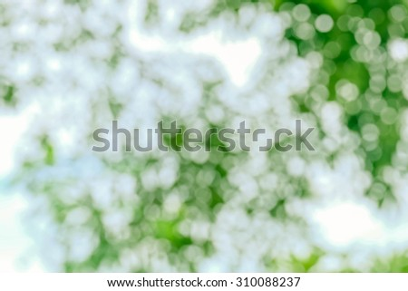 blur background and soft background and bokeh background and nature background
