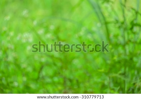 blur background and soft background and flowers