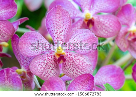 Blur background of purple orchids, Vanda, in soft color and soft blurred style, defocused, with other blossom, selective focus point.