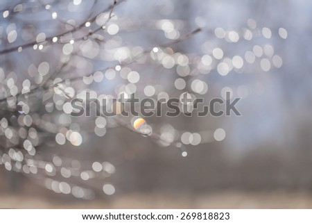 Blur background with bokeh drops of dew on the branches of a tree after rain in early spring