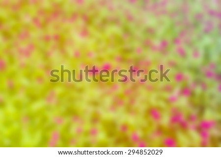blur bright ,Nature background beauty background