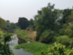 Blur focus of view on extensive meadows, a clump of forest and a wild river.