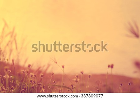 Blur grass flower on tropical sunset beach abstract background.Nature background.Retro color style.
