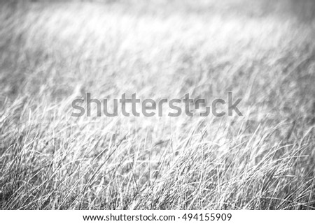 blur in  south africa  abstract grass like background texture #494155909