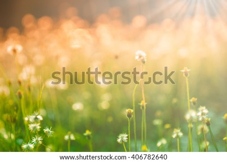blur Natural flower outdoors bokeh background in green and yellow tones with sun rays #406782640