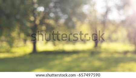 blur of apple garden in sunny day with lens flare, wide photo - Shutterstock ID 657497590