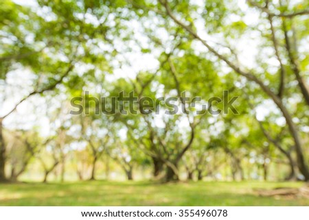 Blur of green natural tree in park background.