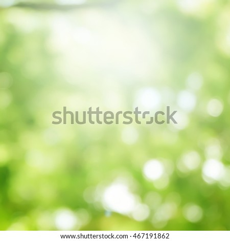 blur of leaves tree sunshine background with sunny light effect.
