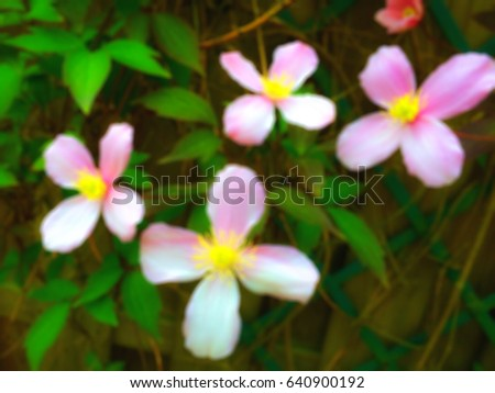 Blur or Blurred photo of Pink ivy flower with natural background or Flower wall fence and the best Climbing Plant with flower for your Garden Fence or Wall.