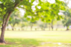 Blur park garden tree in nature background, blurry green bokeh light outdoor in summer background