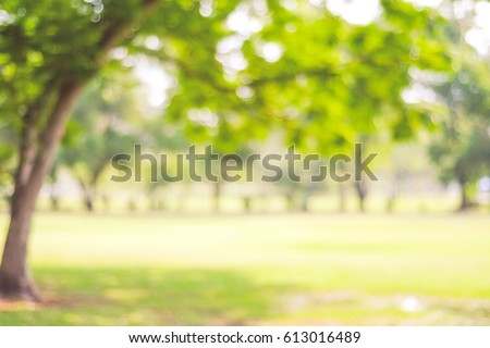 Blur park with bokeh light background, nature, garden, spring and summer season #613016489