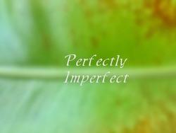 Blur perfectly imperfect Fern leaf.
