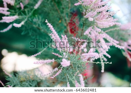 Free photos tree silhouette tree branches isolated on the pink blur pink flower pine tree 643602481 mightylinksfo