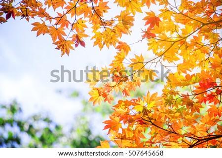 Blur vivid autumn natural background in Japan #507645658
