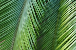 Blured background with palm leaves in botanical garden.