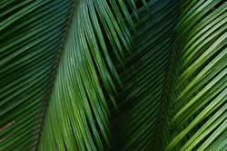 Blured background with palm leaves in garden.