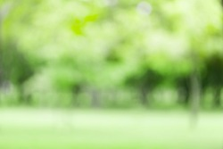 blured photo Natural green trees Lawn and trees green background with Beautiful lawn The shadows of the shrub are grassy smooth clean.With sunlight bokeh
