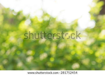 Blured photo of young bush branches with little fresh green leaves in sun shine garden outdoors