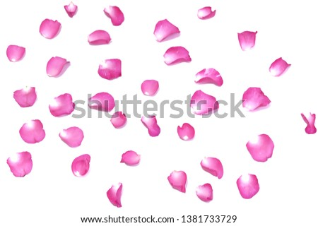 Blurred a pink rose corolla on white isolated background with softly style  #1381733729