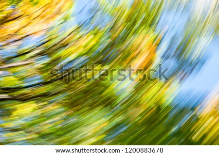 Blurred abstract background of autumn leaves on trees in motion. The concept of rotation in nature in autumn.