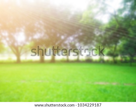 Blurred abstract  background of lawn grass green tree nature environment with sunlight rays ,green nature in the park for background - Shutterstock ID 1034229187
