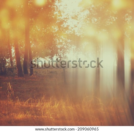 blurred abstract photo of light burst among trees and glitter bokeh