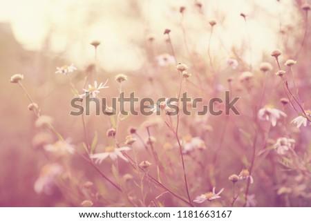 Blurred Autumn