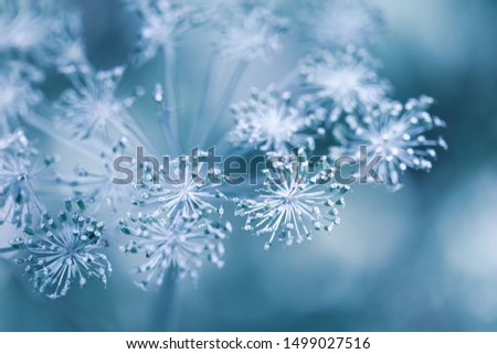 Blurred Autumn-winter background with dry plants covered hoarfrost in winter morning. First frost of autumn. #1499027516
