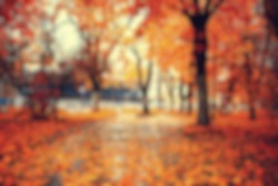 blurred background autumn forest, abstract art sunny autumn park, glow yellow october view