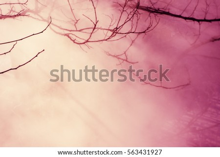 blurred background, branches and fog on a sunny day #563431927