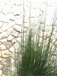 blurred background. Bunch of fresh green grass flourishes beside the walls constructed of natural white stone