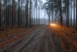 Blurred background. Landscape.  Dirt road in autumn pine forest. Dusk.  In the distance there is approaching car with glowing headlights, which diverge in two stars with long six-pointed beams.