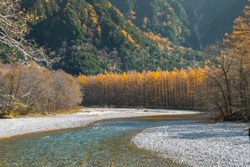 Blurred background of an emerald blue river flowing through the autumn forest in Kamikochi, Japan. There are gray boulders on the banks and many trees with green, orange, and yellow leaves.