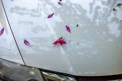 Blurred background Of fallen leaves on the bonnet of a car parked on the roadside while traveling