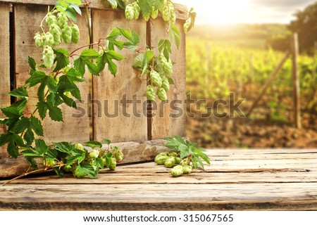 blurred background of hop plantation and wooden box