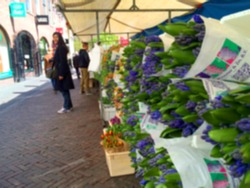 Blurred background of Vacation or Holiday in Utrecht the Netherlands Europe. Flower Street Market