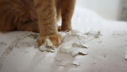 Blurred cat's paws standing on cat scratched damaged white leather sofa.