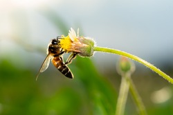 Blurred close up bee insect flying on flower, beautiful nature in grass field