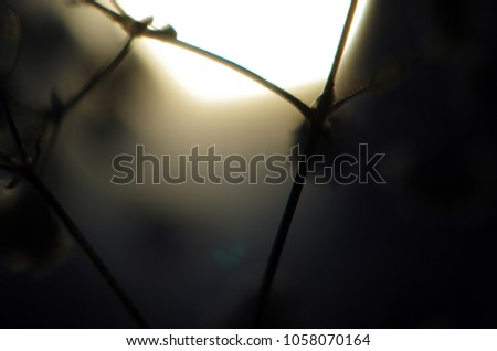 blurred contours plants #1058070164