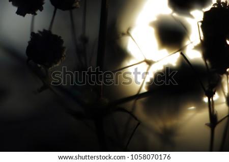 blurred contours plants #1058070176