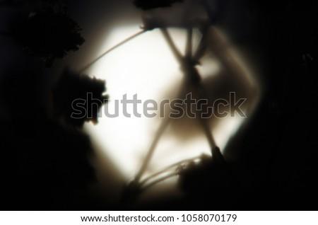 blurred contours plants #1058070179