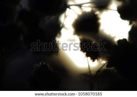 blurred contours plants #1058070185