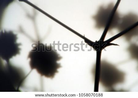 blurred contours plants #1058070188
