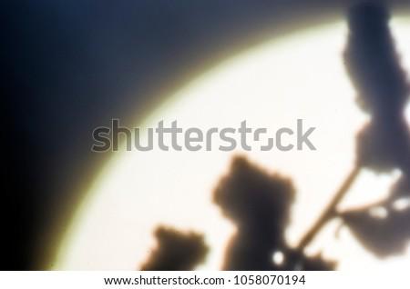 blurred contours plants #1058070194