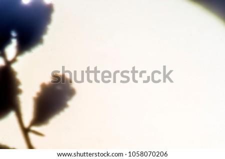 blurred contours plants #1058070206