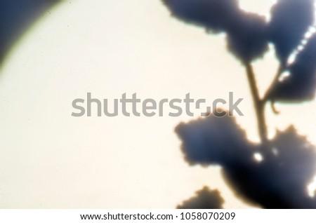blurred contours plants #1058070209