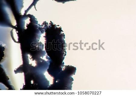 blurred contours plants #1058070227