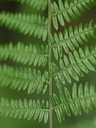 blurred fractal pattern Fern leaves