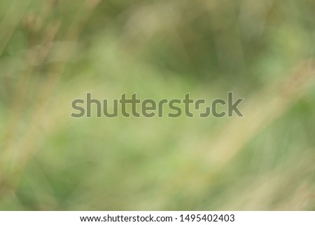 Blurred. Green blurred background. Blurred meadow, flowers, plants, herbs. Natural background. #1495402403