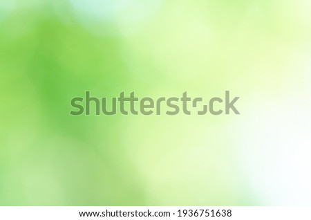 Blurred green Bokeh natural tree in parks with bight sunlight
